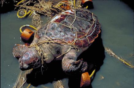 Tsunami Japan Destroys Natural History Collection