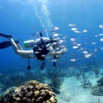 India's First Research Centre for Marine Species and Marine National Park to come up in Gujarat
