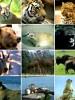 wild-animals_18059