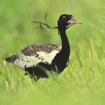 14 Species of Birds on the Verge of Extinction