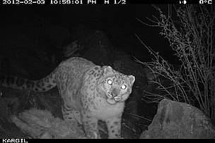 2_snow_leopard__kargil__feb__12_wwf_india___dept_of_wildlife_j_k_copy_34380