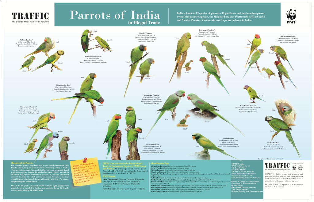 Pet Parrot Trade Killing millions of Birds - India's Endangered