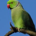 Pet Parrot Trade Killing millions of Birds