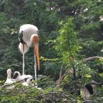 A Birder's Paradise: Bharatpur Bird Sanctuary