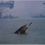 Kolkata's New Resident: Rare Baby Gangetic Dolphin!