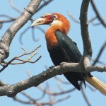 Home of the Hornbills Saved from Defence Radar