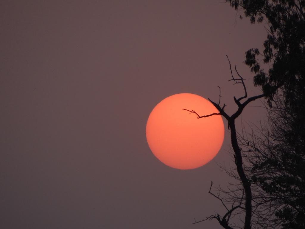 dawn by Arijit Gupta