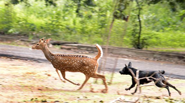 Industrial Effluents Become Death Trap For Indian Gazelles