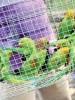 Seized birds in Kolkata