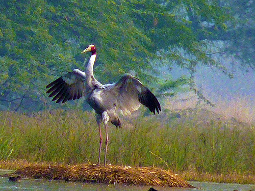 Big Bird Day Records 787 Bird Species of India - India's