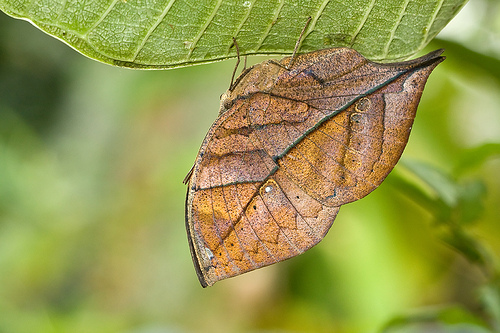 7 Spectacular Butterflies Of India (Photos)