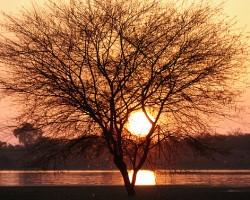 Thol Lake - Gujarat, India