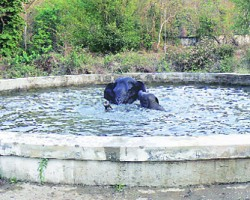 An Elephant and its Calf fell in the Water Tank in Narangi cant., Assam