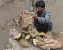 The Poacher with his Loot