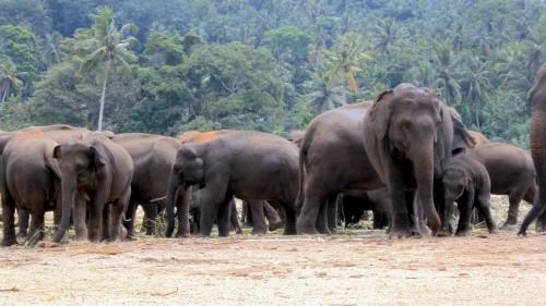 elephant-orphanage-170867_1280