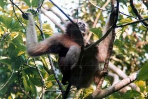 Sanctuary Watch: Hollongapar Gibbon Wildlife Santuary, Assam