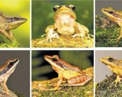 frog_2177489f