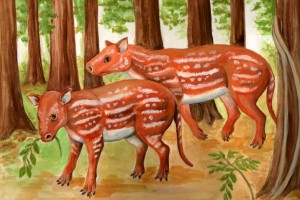 Common Ancestors of Horses and Rhinos Found in India