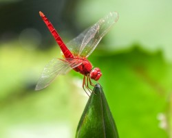 dragonfly-515512_1280