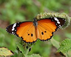 Butterfly Photos could Help you Win!