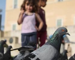 Pigeon Brains Work just like Children
