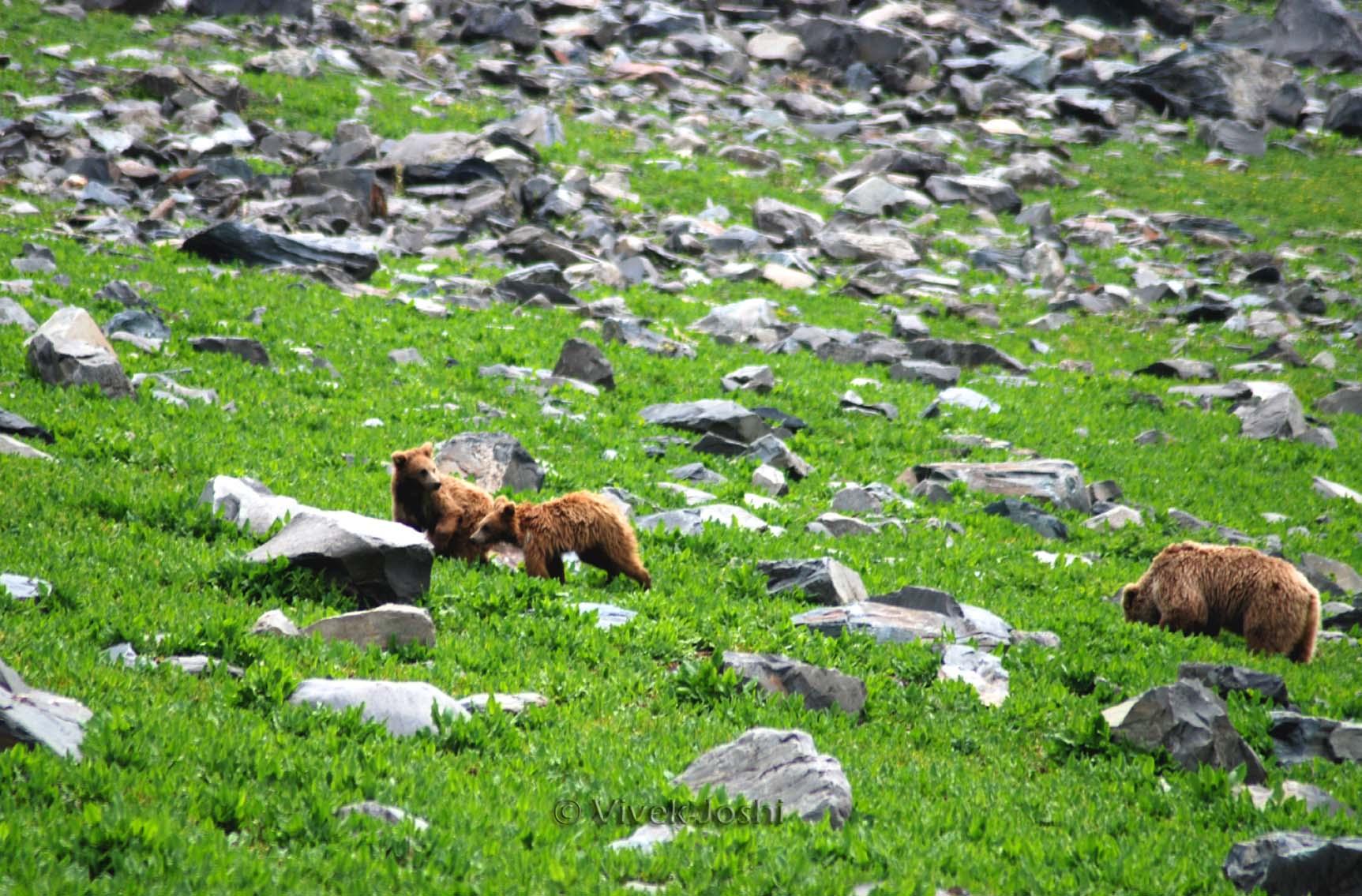 Eco Travel Dachigam National Park Jammu  Kashmir  Indias