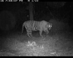 Hidden Jungle Animals Caught on Camera by School Children
