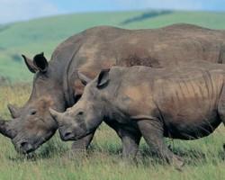 Sniffer Dogs to Protect Rhinos of Kaziranga