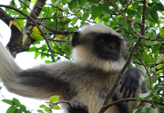 monkey-229972_640