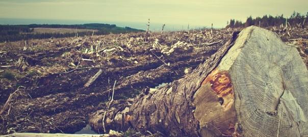 deforestation-405749_640
