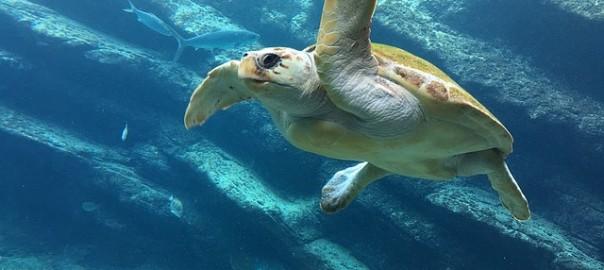 turtle-1202692_640