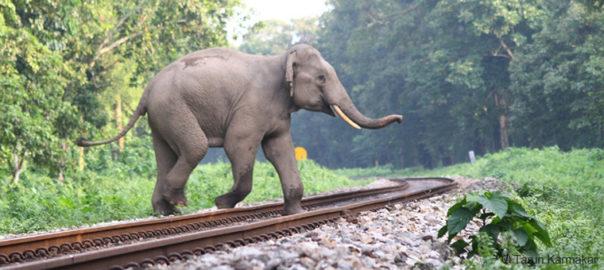 Elephant-Crossing