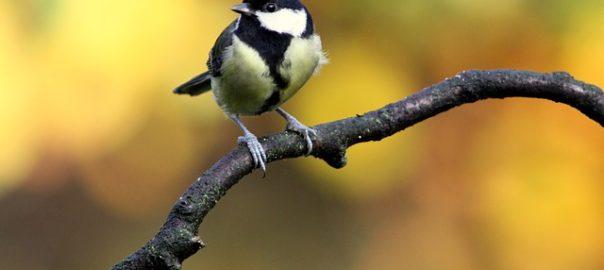 bird-205349_640