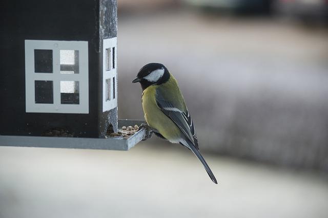 small-birds-1046534_640