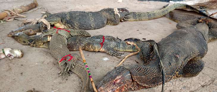 Monitor lizards, bound and injured but still alive, on the platform at the Panskura Railway Station. Image via PUBLIC