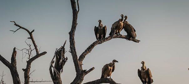 vultures-1081751_640