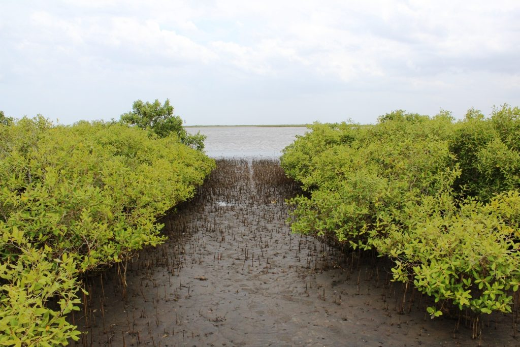 Krishna river mangroves along India's Eastern coasts