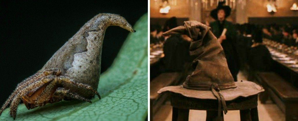 Spider Discovered In Western Ghats Gets Name Inspired From Harry Potter Books