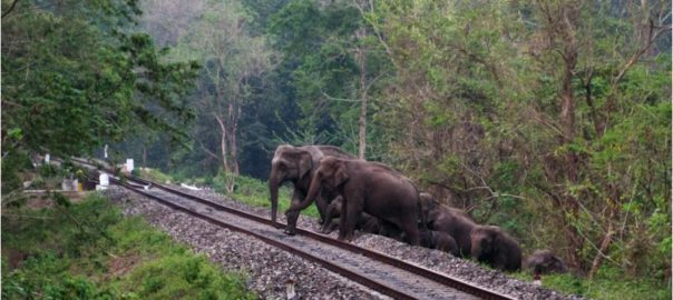 Tracking The Jumbo Tragedy On The Tracks