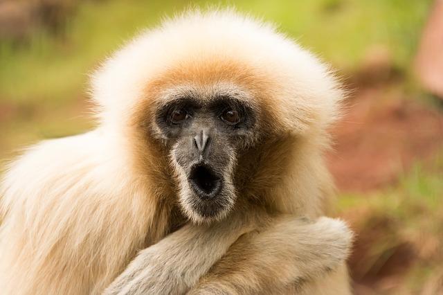 monkey-1807173_640