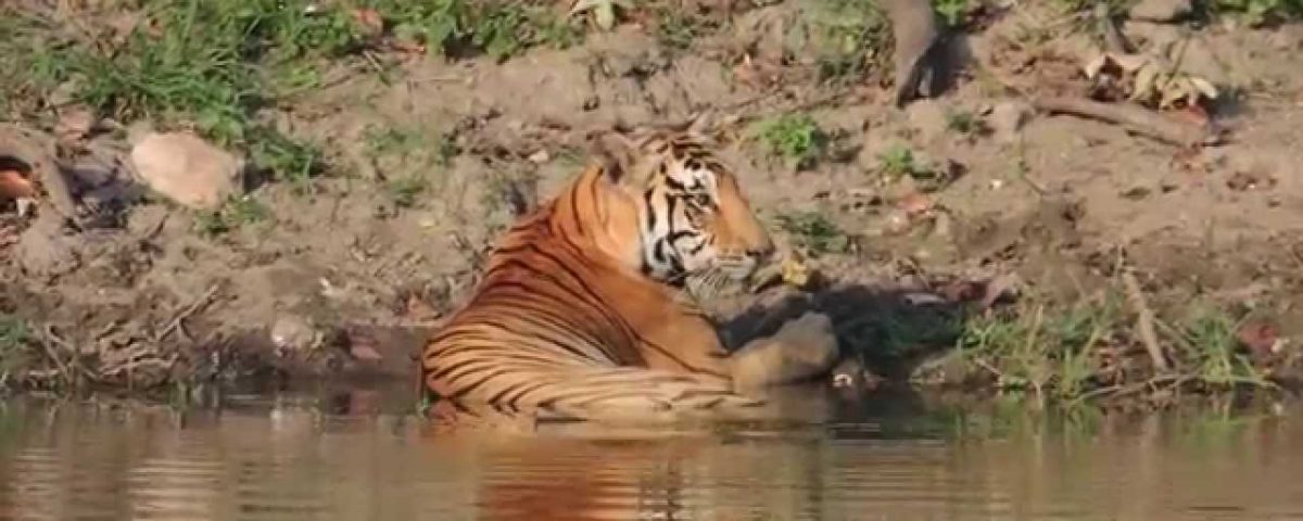 Bandipur Animals Get Solar Powered Pumps To Quench Their Thirst