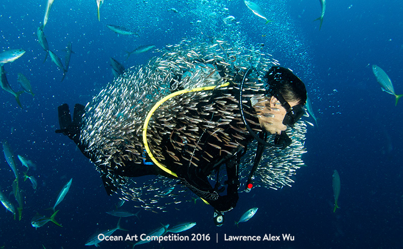 "Lawrence Alex Wu ""Bait Ball Cocoon"".Hin Deang, Thailand"