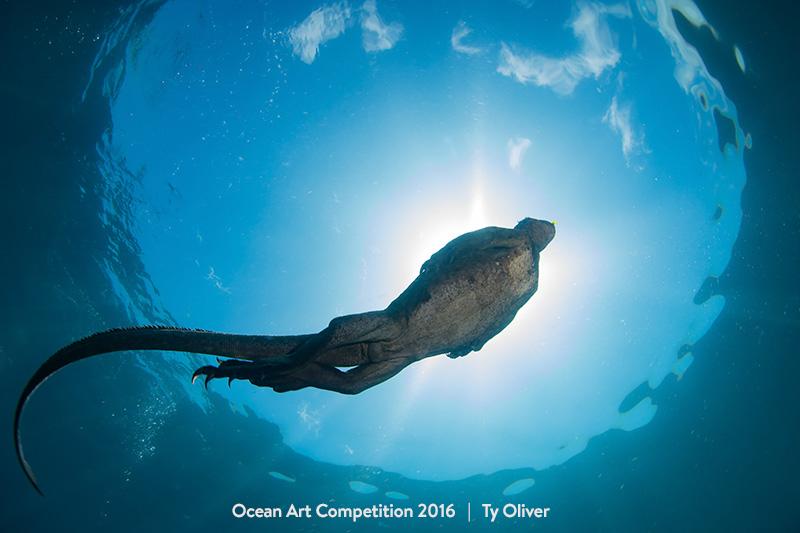 """Ty Oliver """"Marine Iguana Sunburst"""". Fernandina Island, Galapagos"""