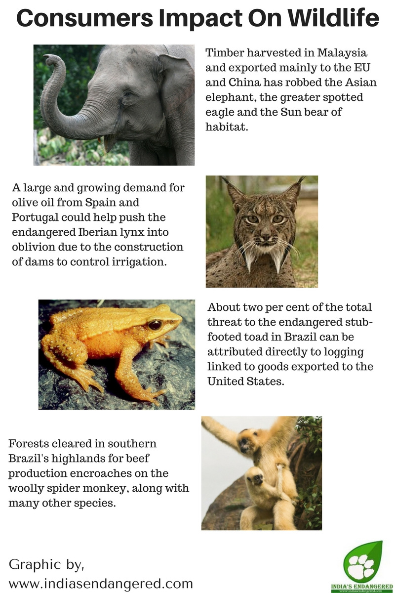 Consumers Impact On Wildlife