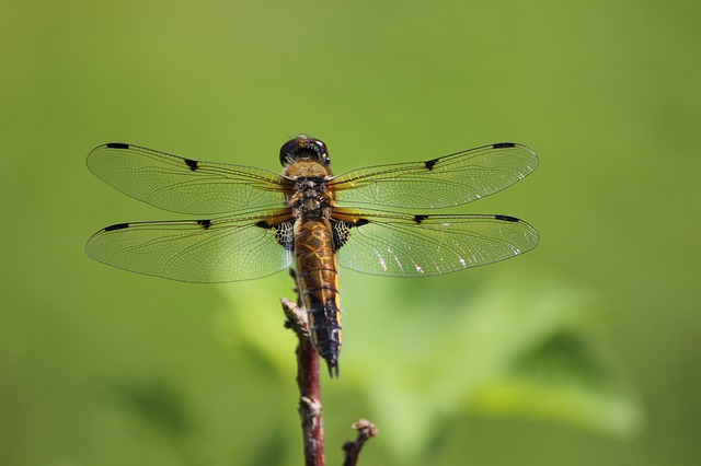 What's The Difference Between Dragonfly and Damselfly?