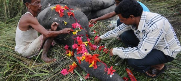Forest Staff Asked To Be On High Alert To Prevent Elephant Deaths On Track