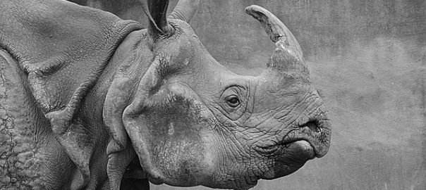 Selfie Inside Kaziranga National Park Gets Poachers In Jail