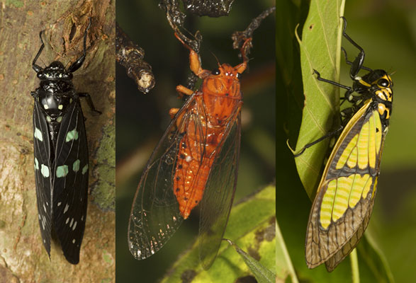 Decoding The Lives Of Mystery Insects