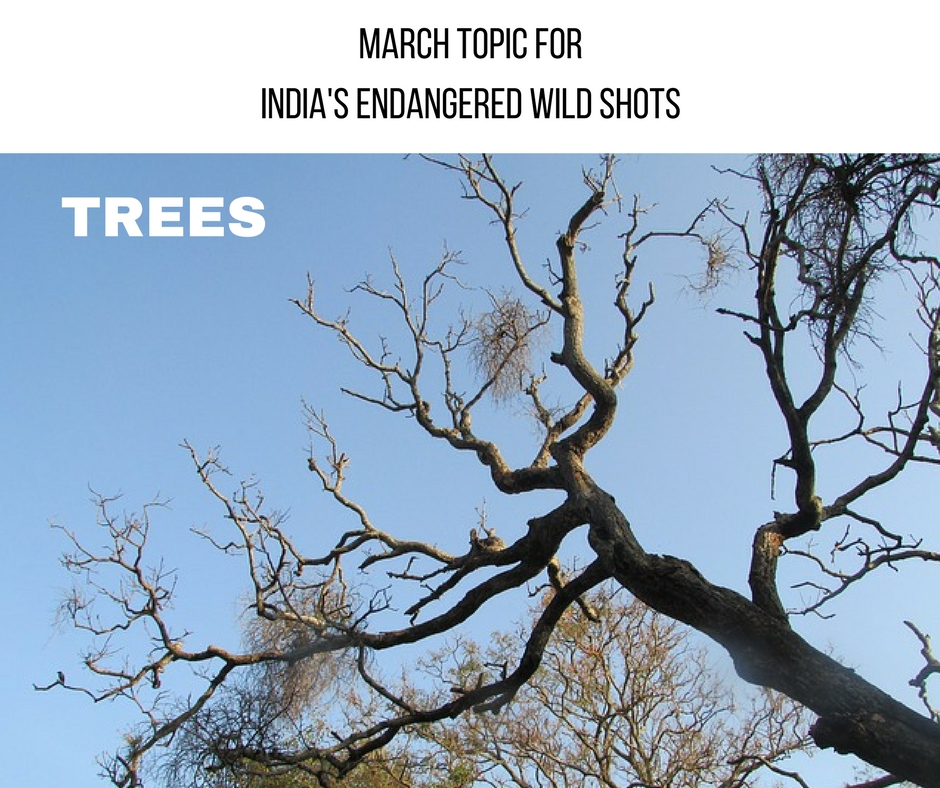 MARCH TOPIC forINDIA'S ENDANGERED WILD SHOTS