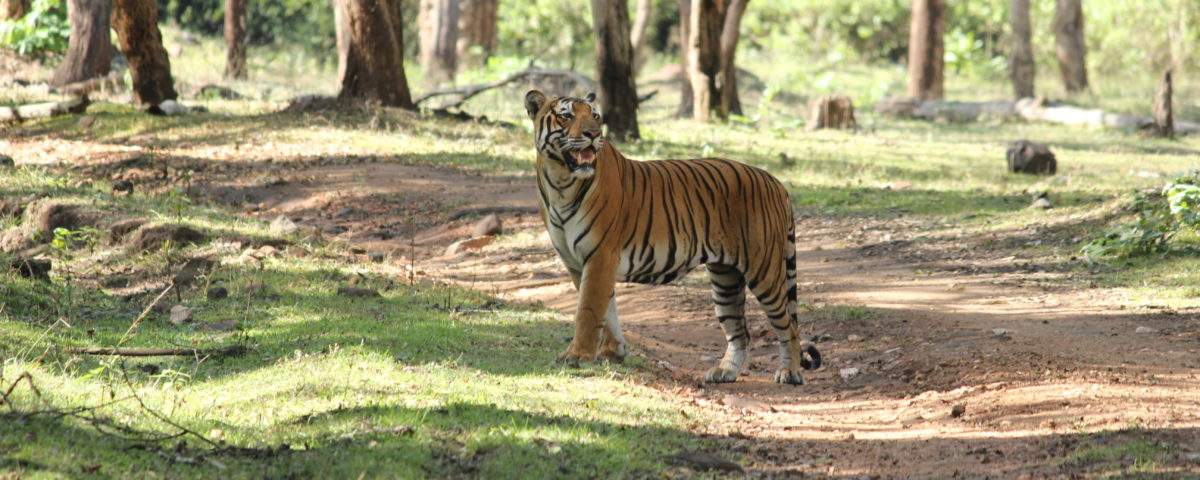 WILD CATS AND WILD DOGS OF INDIA CHOOSE TO CO EXIST RATHER THAN COMPETE